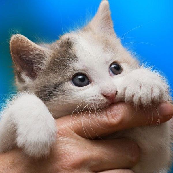 Source: Catster (Cat scratch disease)
