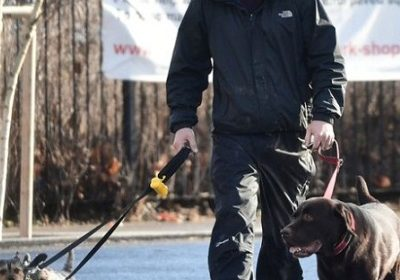 The custody battle for their furry family member dog Hurley in the divorce of Ant McPartlin and his wife Lisa Armstrong!