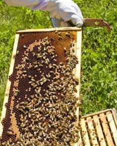 Honey galore! The celebrities of Hollywood who are bee-lovers and beekeepers!