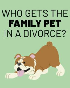 Former couples fight bitterly over pets during divorce!