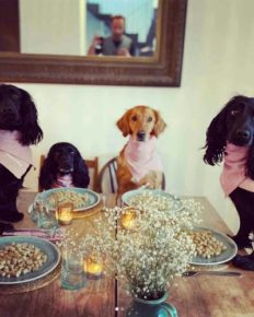 James Middleton, brother of Kate Middleton has a dinner party with his dogs!