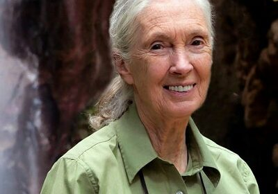 Prince Harry is finding his new life outside the royal household challenging, says anthropologist Dr. Jane Goodall!