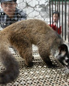 Wet wildlife markets! Shenzen bans the consumption of dogs and cats, Will penalize the violators!